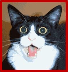 猫ショック01